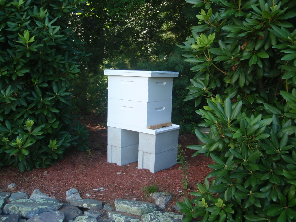 My Langstroth hive with two brood boxes