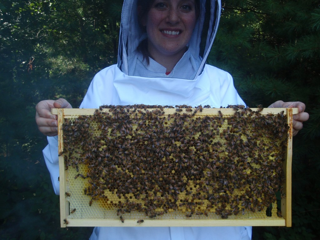 Frame from my Langstroth hive. The bees build the comb from the starter wax.