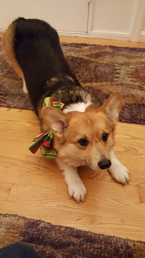 I'll show off my downward dog skills, oh and this bow.